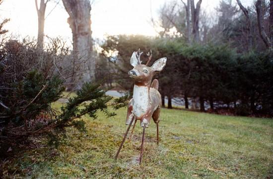Legless deer in Medusa, NY