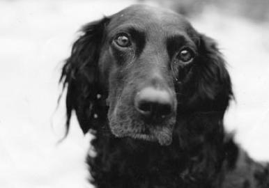 Marie-Helene Carleton and Micah Garen's dog Zeugma