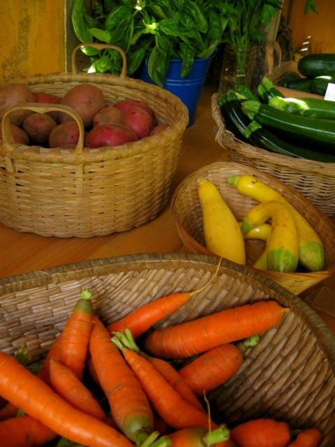 Carrots, squash, zucchini, basil, and potatoes