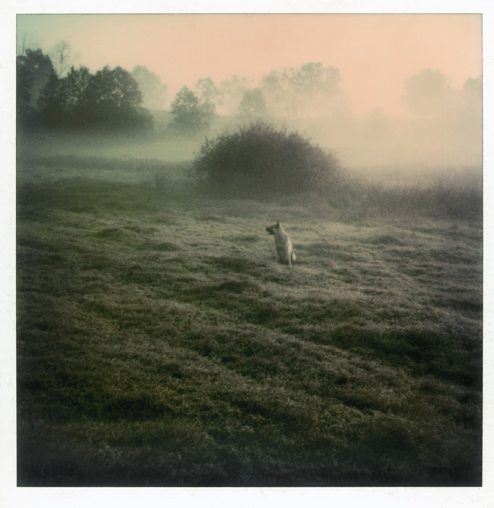 Polaroid by Andrei Tarkovsky from the book Instant Light: Tarkovsky Polaroids from Thames and Hudson, 2006.