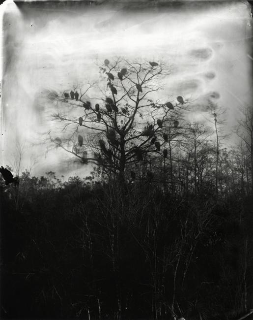 vultures-Lisa Elmaleh