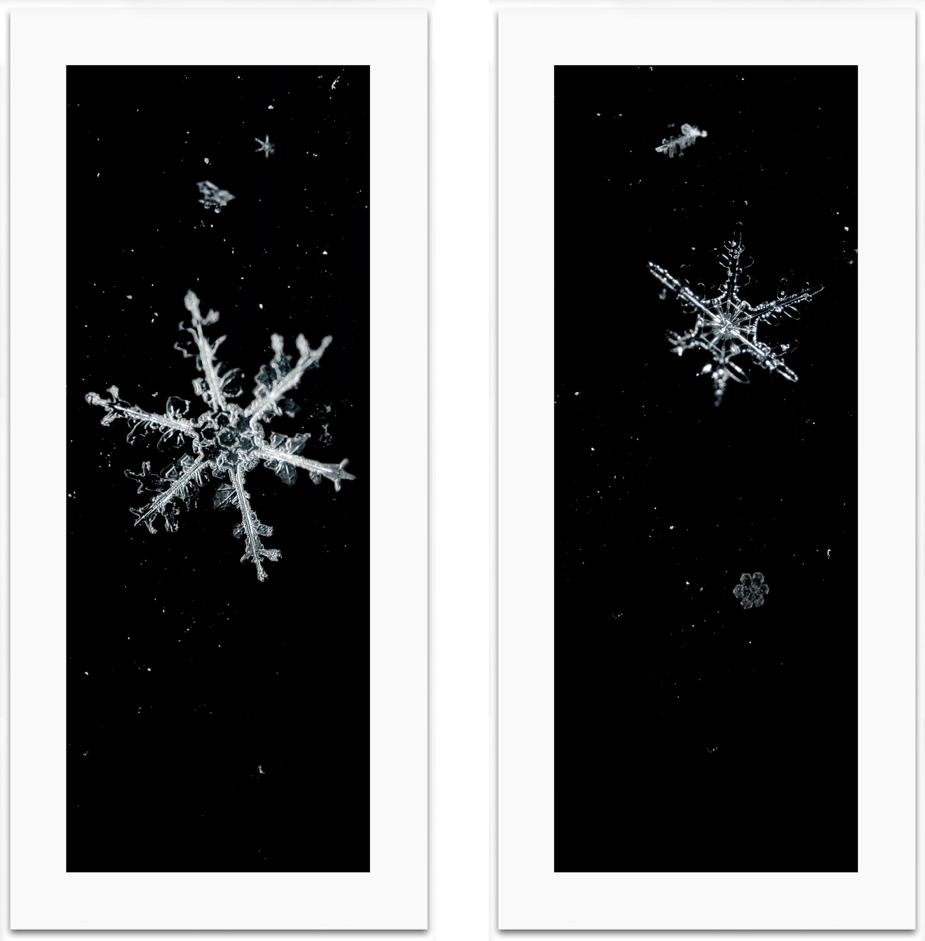 Mike and Doug Starn, Snowfall #1 and #2, 2006-2007.