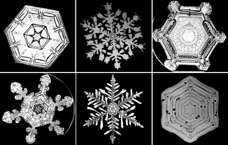 A photograph by Wilson Bentley, the first person to photograph snowflakes.